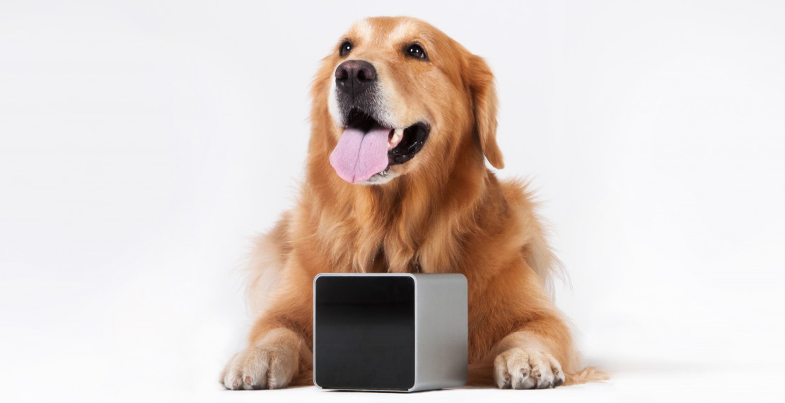 Petcube with Labrador