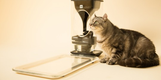 bistro-smart-cat-feeder-view01